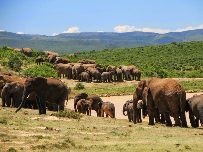 Pembury Tours - Eastern Cape - Addo Elephant National Park - elephant herd