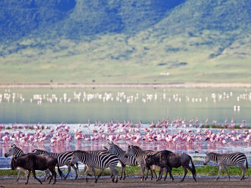 Pembury Tours - East Africa - Tanzania - Ngorongoro Crater - flamingoes, zebras and wildebeest