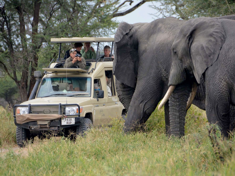 Pembury Tours - East Africa - Tanzania - Serengeti - safari - elephants