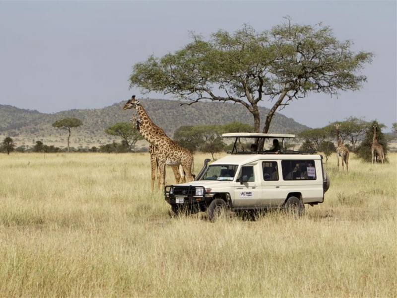 Pembury Tours - East Africa - Tanzania - Serengeti - safari - game drive with giraffe