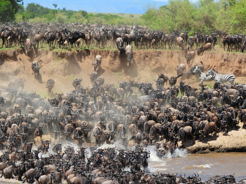 Pembury Tours - East Africa - Tanzania - Serengeti - migration - river