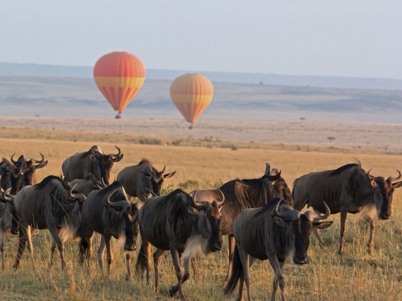 Pembury Tours - East Africa - Tanzania - Serengeti - Hot Air Balloon Safari - wildebeest