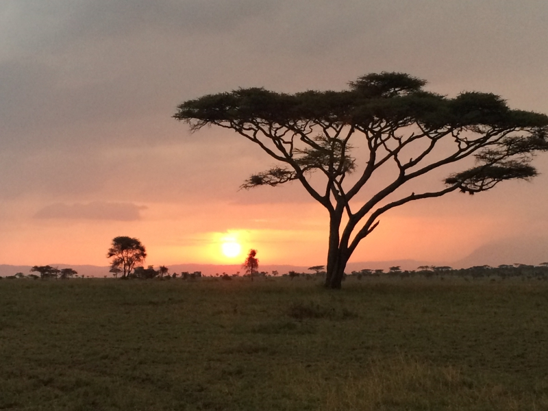 Pembury Tours - East Africa - Tanzania - Serengeti - safari - sunset