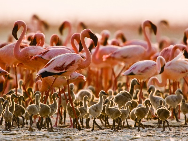 Pembury Tours - Tanzania - Arusha National Park - Game Drives - Game Viewing - Birdlife - Bird Viewing - Flamingo