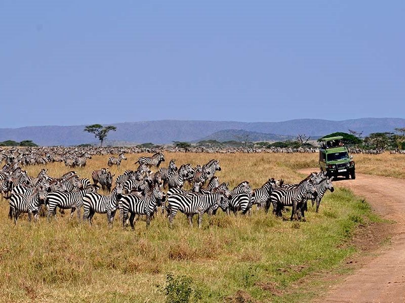 Pembury Tours - Arusha National Park - Tanzania - Game Viewing - Game Drive - Zebra