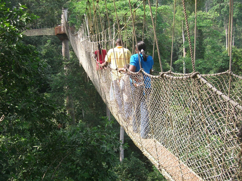 Pembury Tours - Nyungwe Top View Hill Hotel - Nyungwe National Park - Rwanda - Activities - Canopy Walk 4