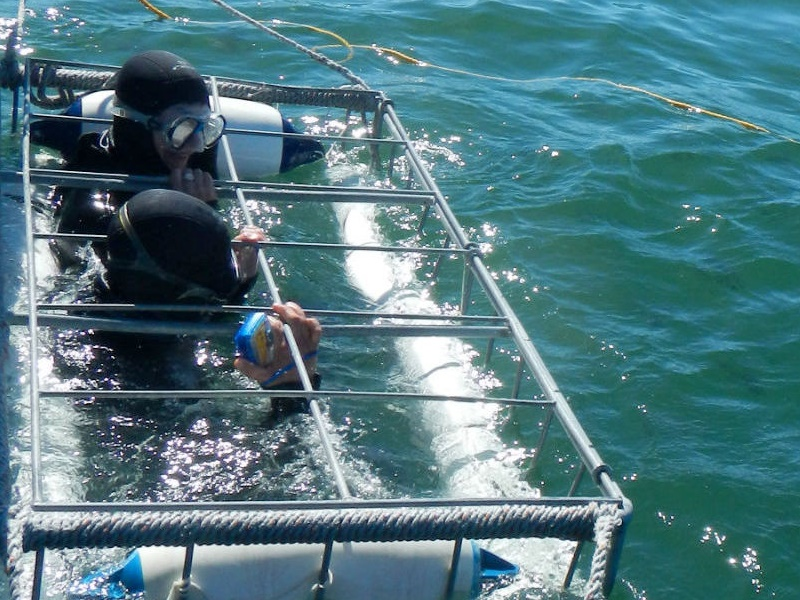 Pembury Tours - Things to do in South Africa - Shark Cage Diving in Hermanus
