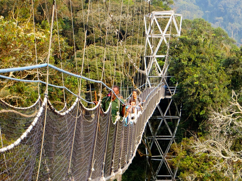 Pembury Tours - Nyungwe Top View Hill Hotel - Nyungwe National Park - Rwanda - Activities - Canopy Walk