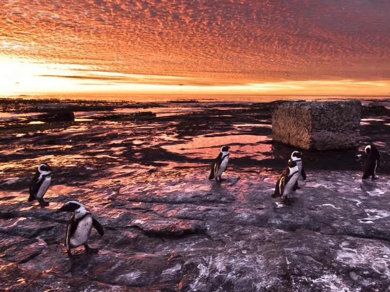Pembury Tour - Robben Island - Cape Town - Penguins
