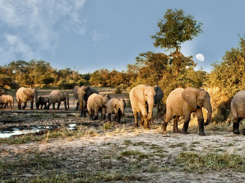 Pembury Tours - Timbavati Game Reserve - Kruger National Park - Game Viewing - Big 5 - Elephants