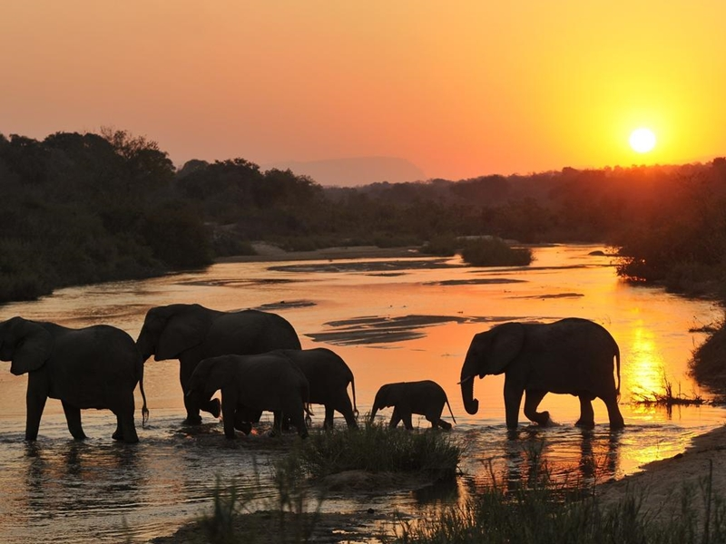 Pembury Tours - Inyati Game Lodge - Sabi Sand Game Reserve - Kruger National Park - Game Viewing - Game Drive - Elephant