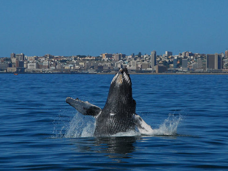 Pembury Tours - Blog - Eastern Cape - Whale Watching