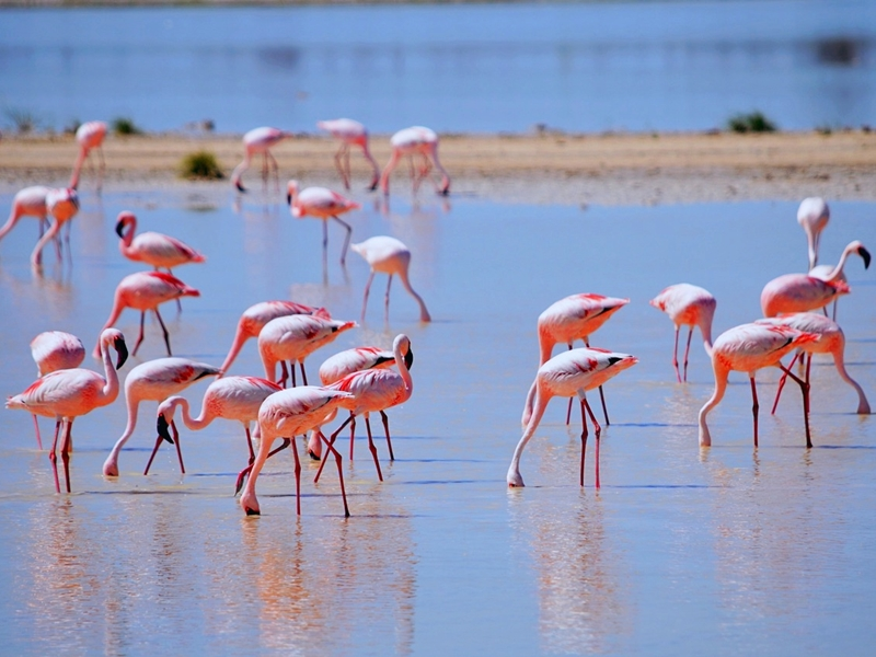 Pembury Tours - Namutoni Resort & Okaukuejo Resort - Etosha National Park - Game Drive - Game Viewing - Birdlife - Flamingo