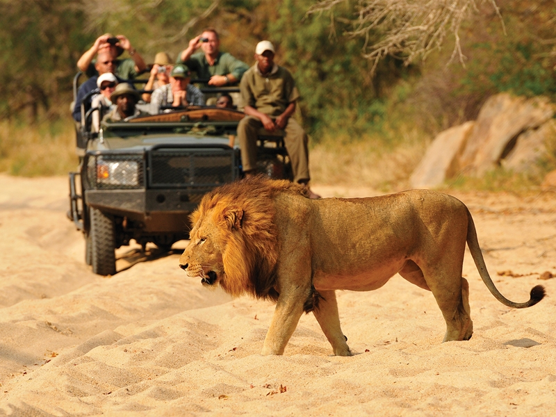 Pembury Tours - Inyati Game Lodge - Sabi Sand Game Reserve - Kruger National Park - Game Viewing - Game Drive - Lion