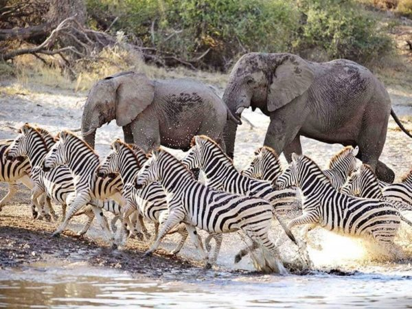Pembury Tours - Makgadikgadi Pans National Park - Botswana - Game Drives - Game Viewing - Elephant & Zebra