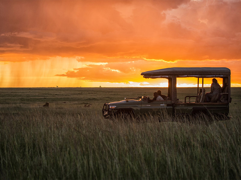 Pembury Tours - Kenya - Maasai Mara - Mara Plains - Game Drive