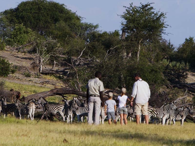 Pembury Tours - Leroo La Tau - Makgadikgadi Pans National Park - Botswana - Game Drives - Game Viewing - Walking Safaris - Zebra