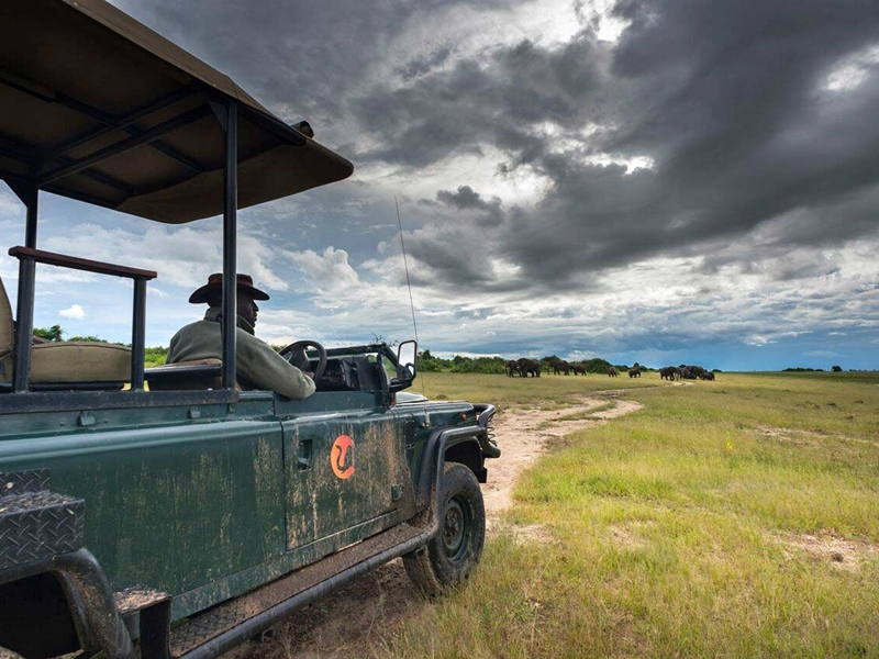 Pembury Tours - Chobe Game Reserve - Muchenje Safari Lodge - Safari Activities - Game Drive - Game Viewing - Elephant
