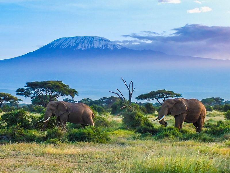 Pembury Tours - Amboseli National Park - Elephants