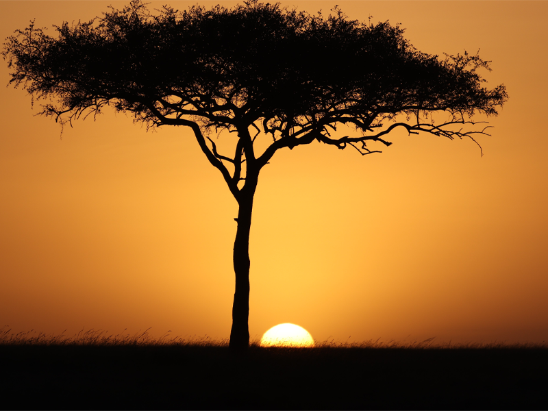 Pembury Tours - Maasai Mara - Sunset