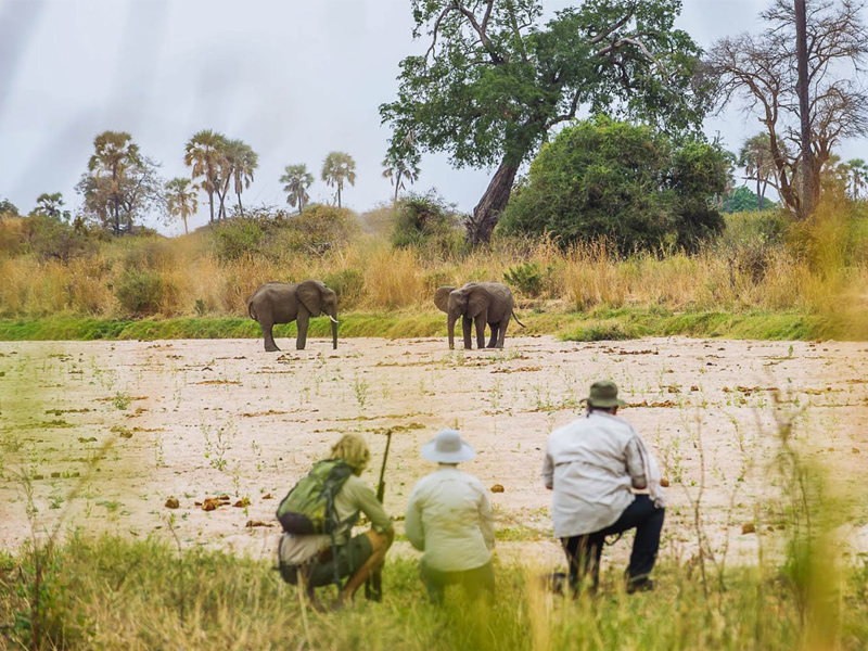Tanzania - Ruaha National Park - Walking Safari
