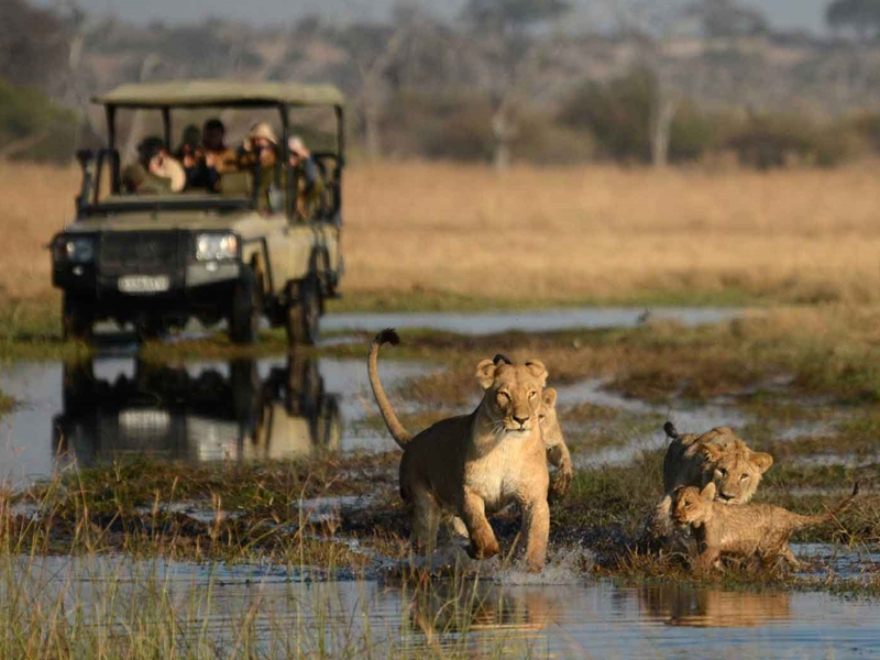 Pembury Tours - Savuti National Park - Botswana - Game Viewing - Game Drives - Lions