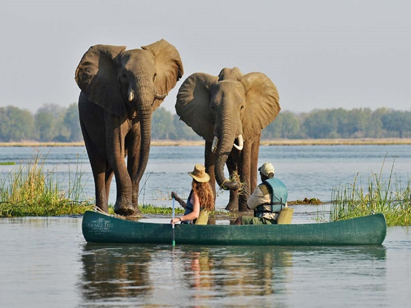 Pembury Tours - Victoria Falls - Zambezi River - Game Viewing - Kayak & Canoe Tours