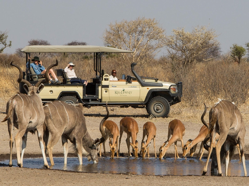 Pembury Tours - Dinaka Safari Lodge - Central Kalahari Game Reserve - Botswana - Game Viewing - Game Drive
