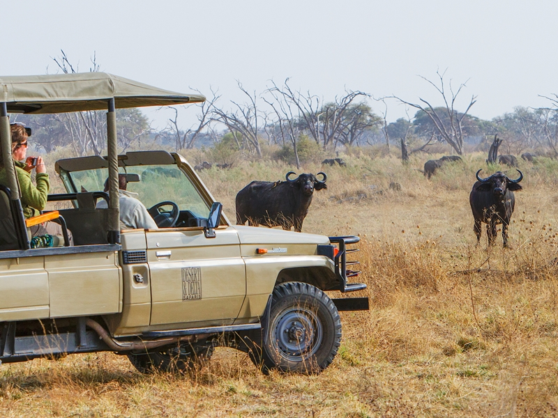 Pembury Tours - Savute Safari Lodge - Savuti National Park - Botswana - Luxury Accommodation - Game Drive Experience - Buffalo