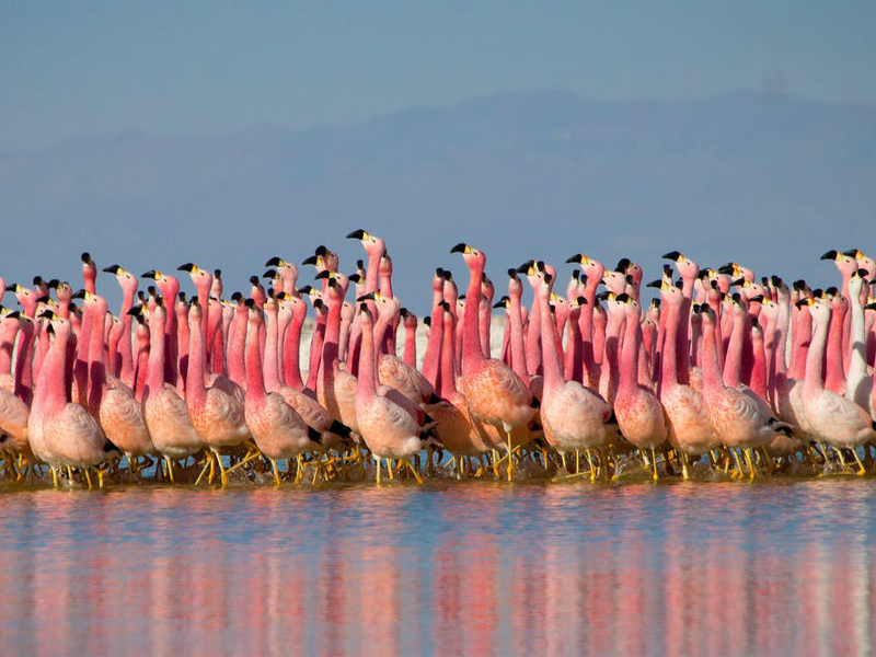 Pembury Tours - Kenya - Lake Bogoria - Flamingos - Close Up