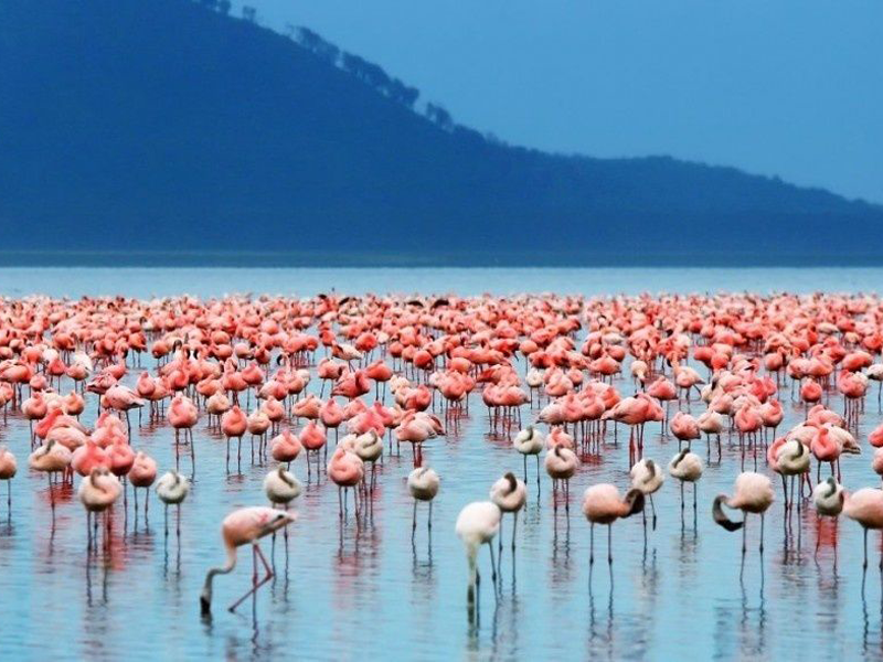 Pembury Tours - Kenya - Lake Bogoria - Flamingos