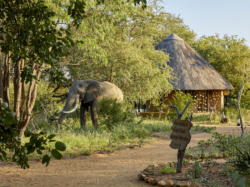Pembury Tours - Kruger - Timbavati - Motswari Private Game Reserve - Reception