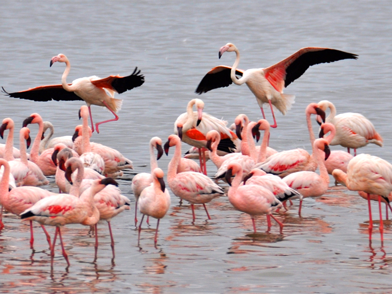 Pembury Tours - Namibia - Walvis Bay - Flamingos