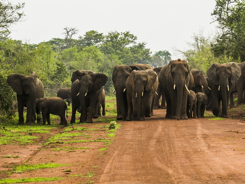 Pembury Tours - Akagera National Park - Rwanda - Game Viewing - Game Drive - Big Five - Elephant