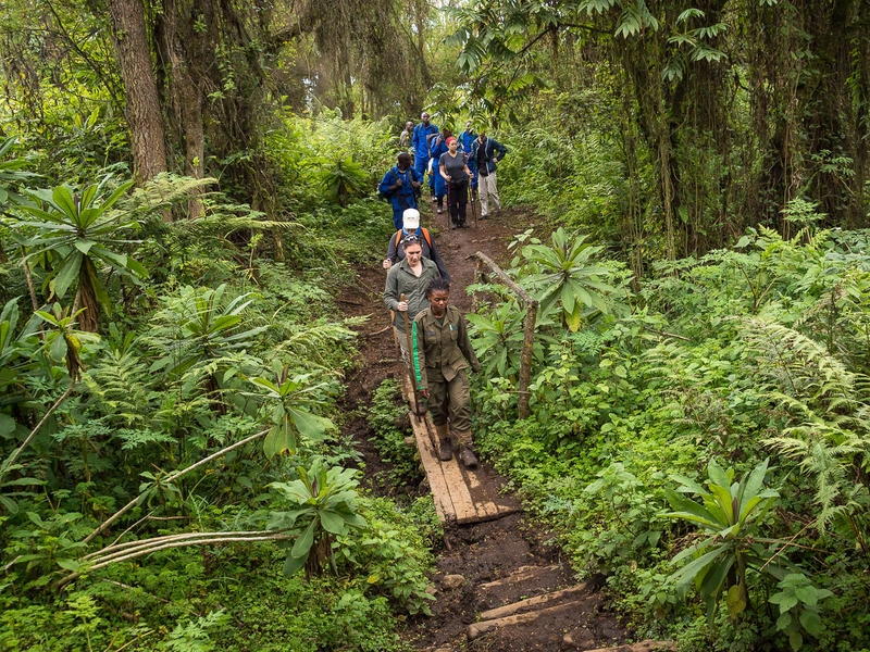 Pembury Tours - Volcanoes National Park - Activities - Visit Dian Fossey Memorial - Forest Walk