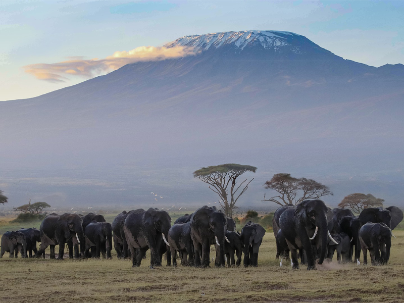 Pembury Tours - Kenya - Amboseli National Park - Big Five - Elephants - Mount Kilimanjaro