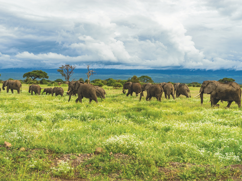 Pembury Tours - Kenya - Amboseli National Park - Big Five - Elephants