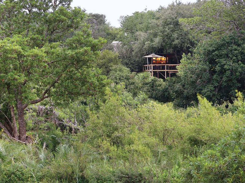 Pembury Tours - Londolozi Tree Camp - Sabi Sand Game Reserve - Kruger National Park - Accommodation - Exterior