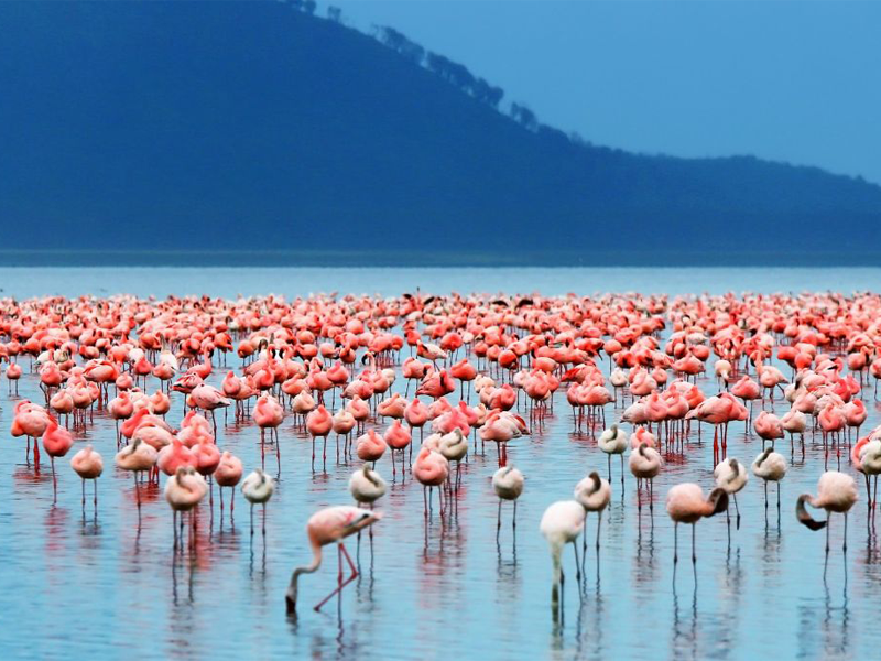 Pembury Tours - Lake Nakuru - Kenya - Bird Watching