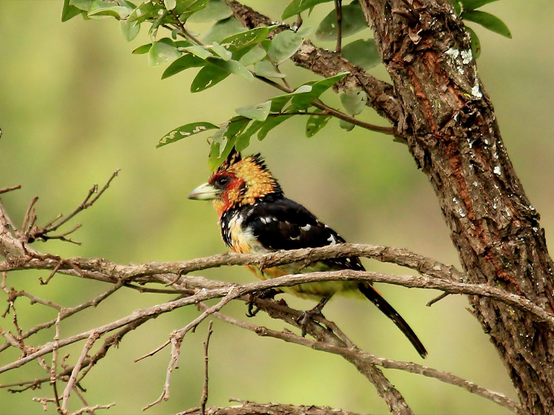 Pembury Tours - Nyungwe National Park - Rwanda - Bird Watching