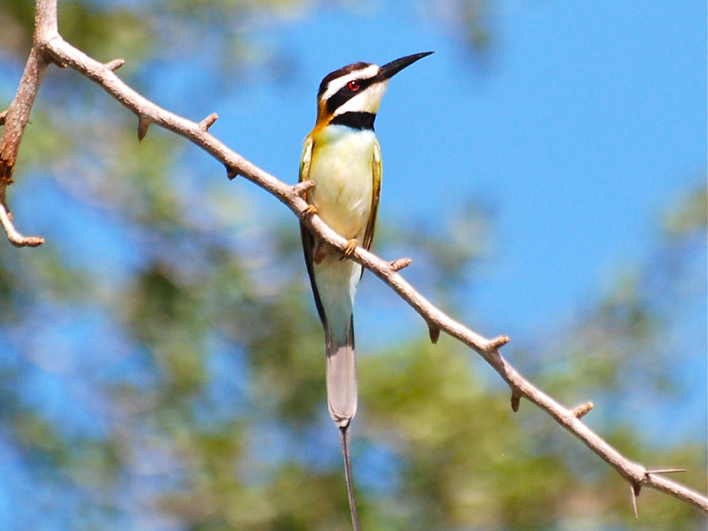 Pembury Tours - Selous Game Reserve - Tanzania - Bird Watching