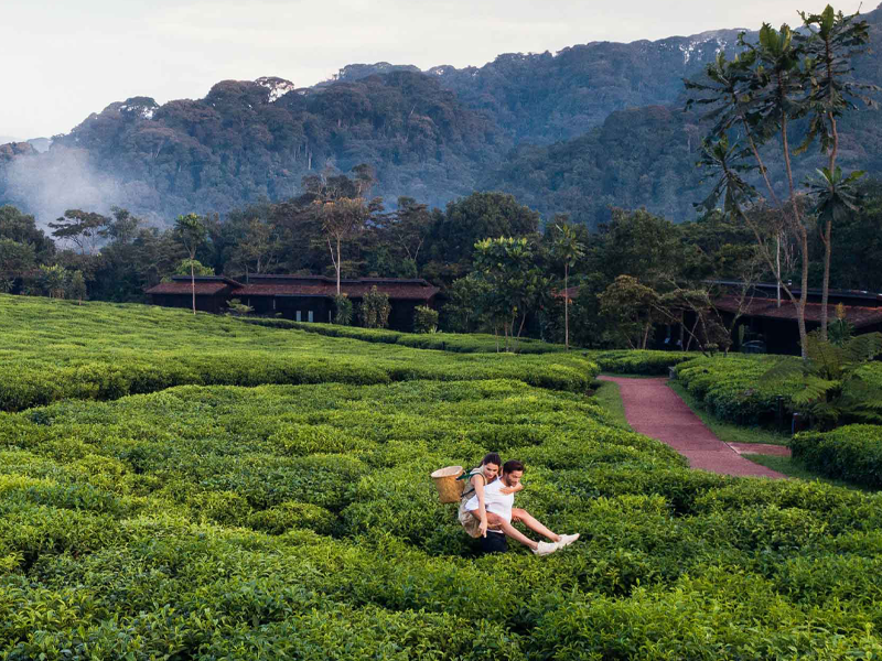Pembury Tours - One&Only Nyungwe House - Nyungwe Forest National Park - Rwanda - Accommodation - Tea Picking