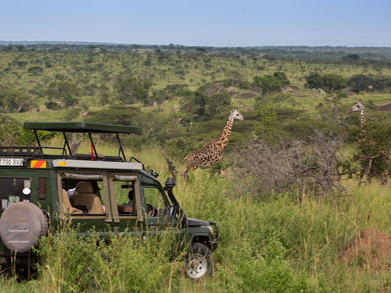 Pembury Tours - Serengeti Migration Camp - Elewana Collection - Serengeti National Park - Northern Tanzania - East Africa - Luxury Accommodation - Game Drive