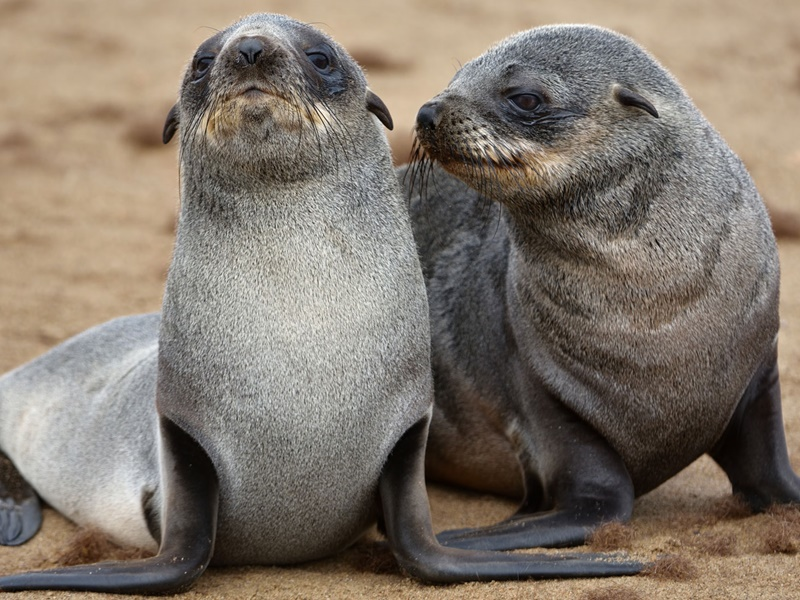 Pembury Tours - Swakopmund Day Trip - Cape Cross - Henties Bay - Skeleton Coast - Namibia - Activities - Seal Pups